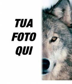Fotomontaggio per dare un volto lupo accanto a voi, completando la vostra metà