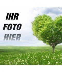 Fotomontage, ein Bild neben Ihrem einem herzförmigen Baum zu setzen