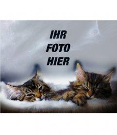 Collage mit zwei Kätzchen