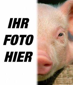 Schwein mit Ihrem Gesicht, um eine Fotomontage zu machen. Nutzen Sie diese kostenlose