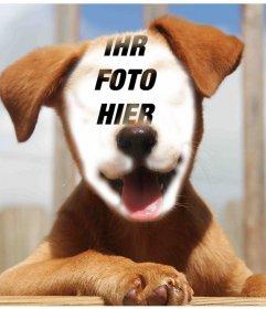 Fügen Sie Ihr Gesicht auf das Gesicht einer schönen Hund mit diesem Effekt