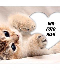 Netter Fotoeffekt eines Kätzchens die ein Herz umarmen Ihr Foto hinzufügen