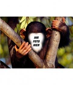Fun-Effekt Ihr Gesicht eines Affen online zu stellen