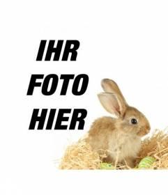 Fotomontage mit einem Kaninchen und Ostereier, um Ihre Fotos online und kostenlos
