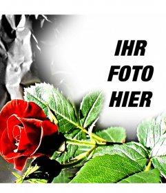Anpassbare Fotorahmen, wenn ein eed Rose, ideal für Liebhaber