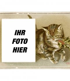 Weihnachtskarte mit Vintage-braune Katze mit einer Stechpalme in den Mund und einem Kasten, in dem ein Foto zu platzieren gezogen