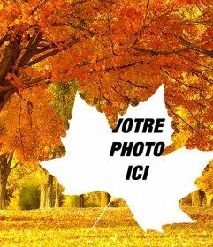 Collage de photos de lautomne avec un fond darbres et un cadre en forme de feuille. Assurez vos photos
