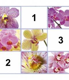 Collage gratuit avec de belles fleurs pour ajouter trois de vos photos