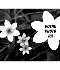 Collage avec une photo de fleurs en noir et blanc et une photo téléchargée par vous en forme de fleur aussi
