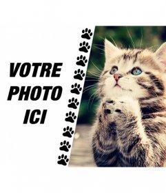 Créer un collage avec chaton drôle demander quelque chose et une photo de vous sur la gauche avec une bande de petites pattes tirés