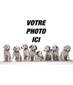 Cadre photo de huit Dalmatiens