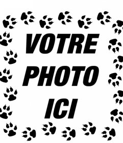 Empreintes de chat autour de vos photos