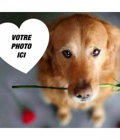 Romantic effet photo avec un chien et une rose pour ajouter votre photo