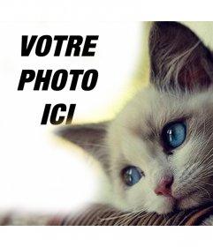 Effet dun bleu-yeux chat mignon pour ajouter en ligne effet photo de votre photo à modifier avec votre photo préférée si vous aimez les chats et part dans vos réseaux sociaux gratuitement. Un effet mignon avec un chaton yeux bleus que vous pouvez modifier à votre image en quelques étapes