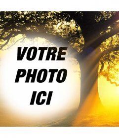 Modifier cette photo collage dun coucher de soleil avec un arbre de votre photo libre effet photo