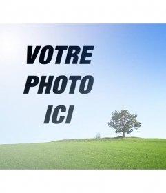 Collage avec une photo dun paysage avec un champ vert et bleu ciel pour mettre une photo à côté dun arbre