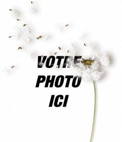 Créer des collages avec une fleur de pissenlit sur vos images et ajoute une phrase avec la couleur et la police que vous souhaitez