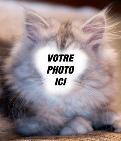 Photomontage pour devenir un chat persan blanc et gris avec votre photo