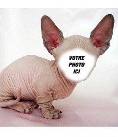 Photomontage dun chat de Sphynx chauve avec de grandes oreilles où vous pouvez mettre votre visage