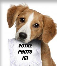 Photomontage avec chiot triste à la recherche de son propriétaire qui a un rôle dans la bouche où vous pouvez télécharger une photo