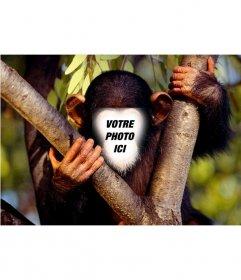 Effet amusant de mettre votre visage à un singe en ligne