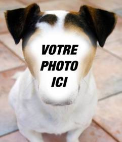 Photomontage dun chien où vous pouvez placer votre visage et gratuitement