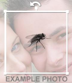 Mettez une mouche sur vos photos de profil et de vos amis