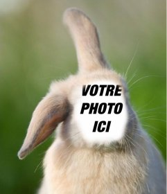 Photomontages en ligne avec votre visage sur le corps dun lapin