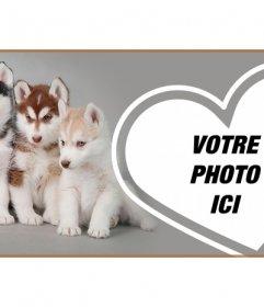 Personnalisez votre profil Facebook avec une couverture complète de chiot husky et votre photo