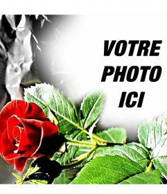 Cadre photo personnalisable si un eed rose, idéal pour les amoureux