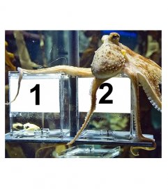 Funny photomontage that Paul the octopus decides who is the winner of the world!