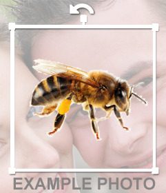 A bee sticker that you can put on your photos very easily