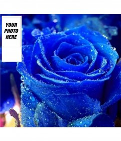 Customize your twitter profile with this fund for blue rose twitter and your own photo on the side