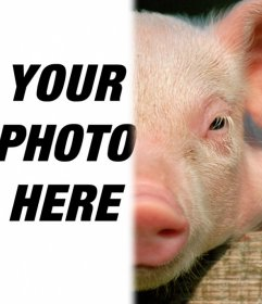 Pig with your face to make a photomontage