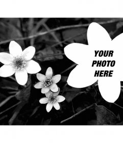Collage with a photo of black and white flowers and a photo uploaded by you flower shaped too