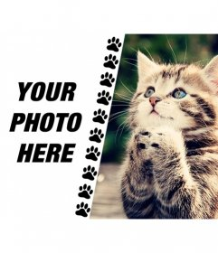 Create a collage with funny kitten asking something and a picture of you on the left with a strip of little paws drawn