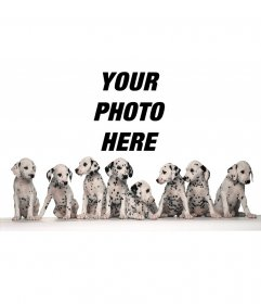 Photo frame of eight Dalmatians