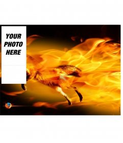 Insert your picture into this photo frame with a fox surrounded by flames, fire orange and black colors