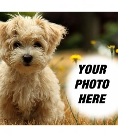 Photo effect with a cute puppy where you can add your photo for free