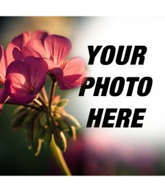 Free photo effect to your photos with a filter of a flower