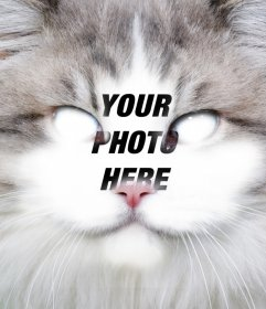 Put your face in the face of a cat editing this free effect