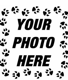 Cat footprints around your pictures
