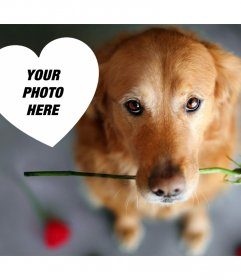 Romantic photo effect with a dog and a rose to add your photo