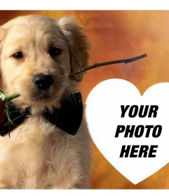 Upload your photo to this effect with a gentle dog and a rose