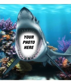 Your photo inside the mouth of a shark under the sea with this fun photomontage