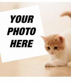 Photo effect with a cute kitten to upload your favorite photo