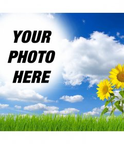 Online effect to edit and add your picture in a landscape with daisies
