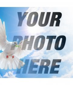 Photo effect with the Peace dove for your photo