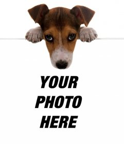 Online effect of a cute puppy holding your photo