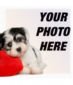 Photo effect of a puppy with a heart for your photo